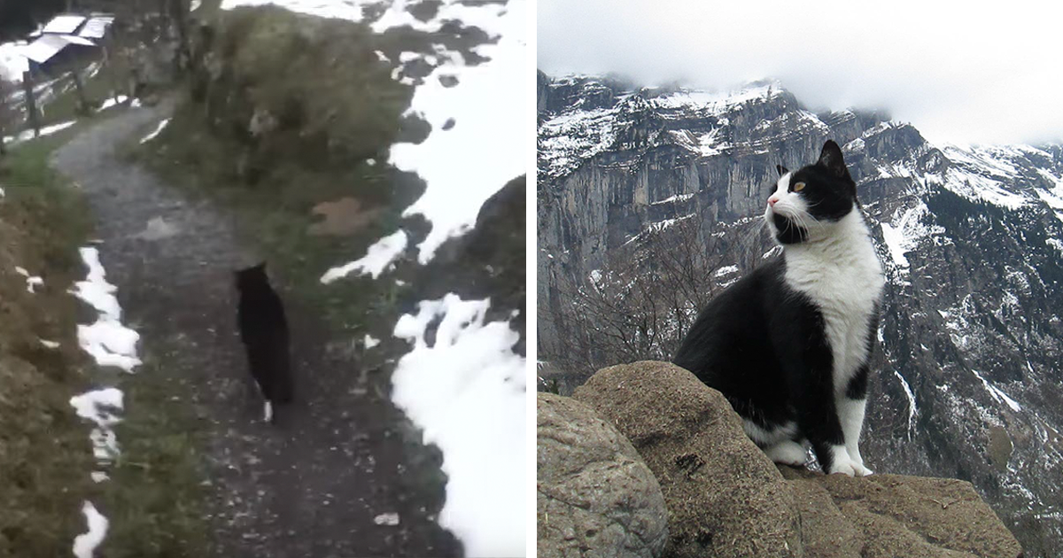 This Cat Guided A Lost Man Down A Mountain In Switzerland