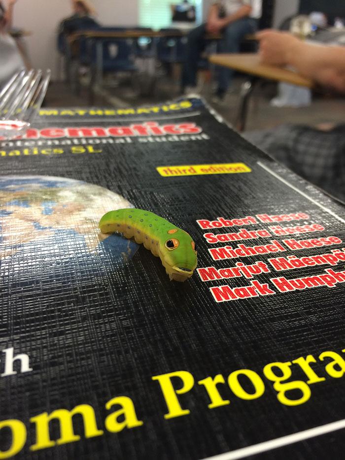 caterpillar-caterpie-evolution-pokemon-go-saga-chicken-nugget-1