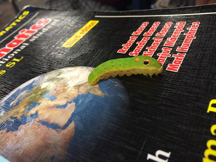 caterpillar-caterpie-evolution-pokemon-go-saga-chicken-nugget-2