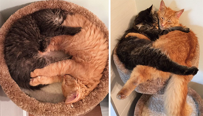 Inseparable Cats Insist On Sleeping Together Even After Outgrowing Their Bed