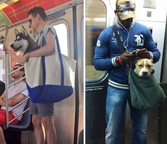 The New York Subway System Bans Canines Unless They Can Fit In A Small Bag, So These Guys Followed The Rules