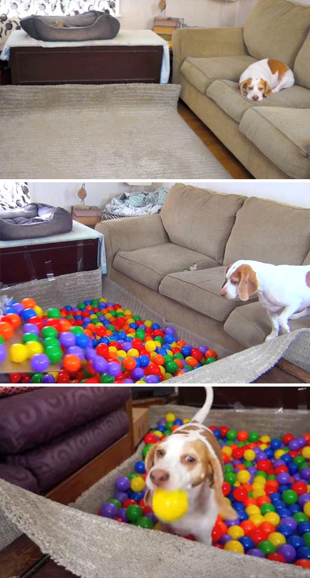 Mejor Perro del cumpleaños de la sorpresa