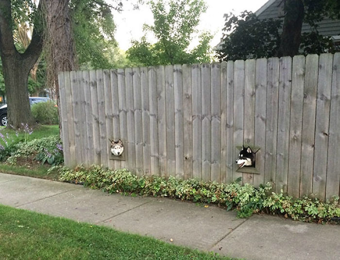 This Creative Neighbour Installed Holes For His Dogs So They Can Peek Outside