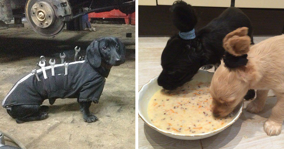 47 Creative Dog Owners Who Did Pawesome Things For Their Dogs