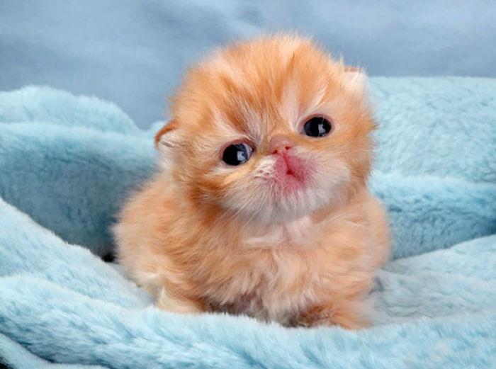 Cutest Fluffypuff