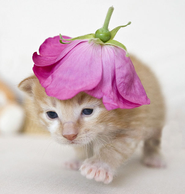 Kitten Is Rocking His Flower Hat