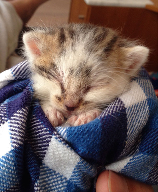 We Found Him Crying All Alone In The Grass. He Was Only Two Weeks Old And Malnourished. This Was Taken After We Removed All The Ticks And Fleas And Gave Him A Bath