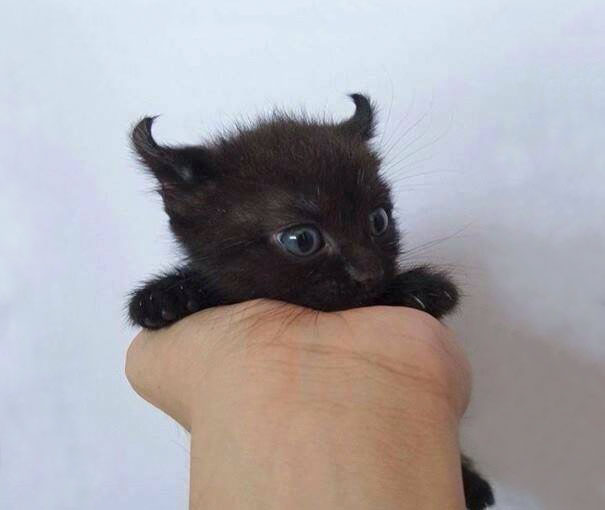 Little Evil But Still Cute Kitty