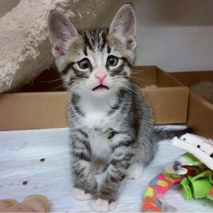 Bum, The Worried Kitten