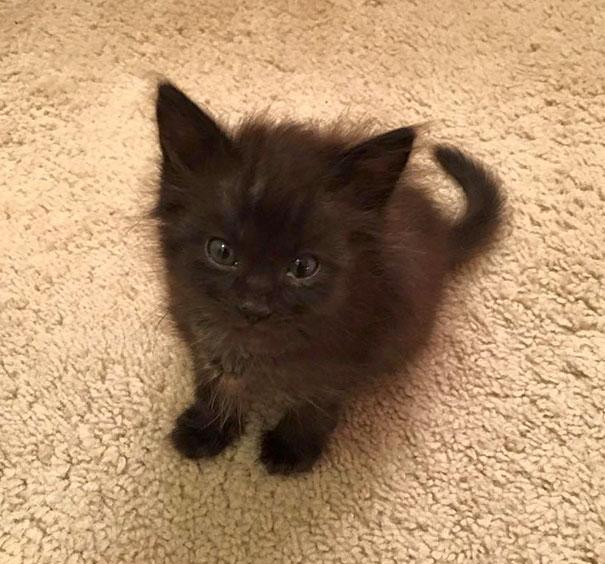 Black Baby Kitten