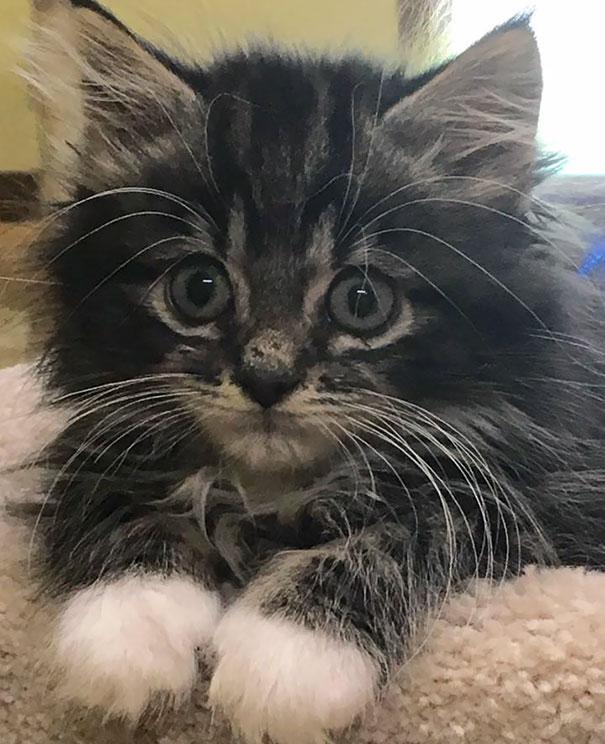 Precious Baby Abner