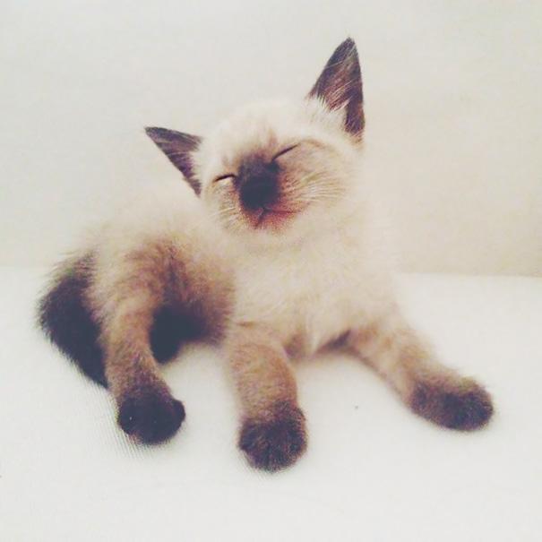 Little Greta