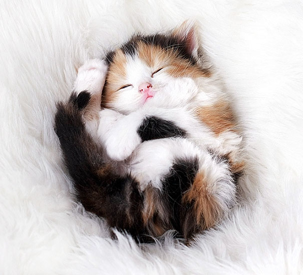 Sweet Dreams, Adorable Kitten