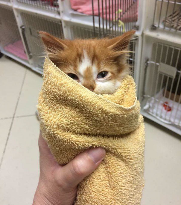 Little Purrito