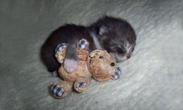 Cute Kitten Sleeping With A Friend