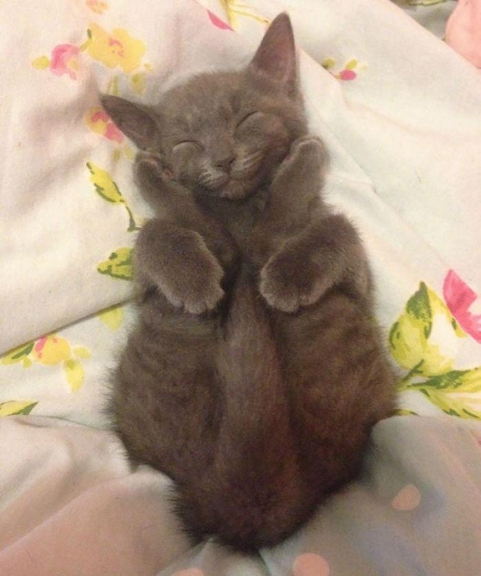 Happy Sleeping Yoga Kitten