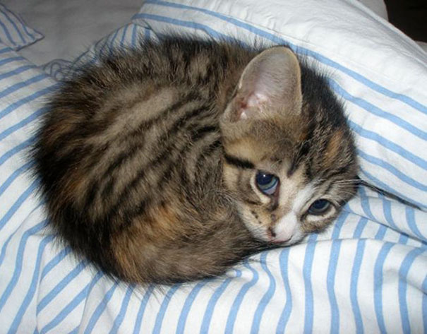 Ball Of Kitten