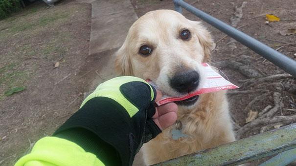 dog-loves-mail-postman-pippa-martin-studer-1