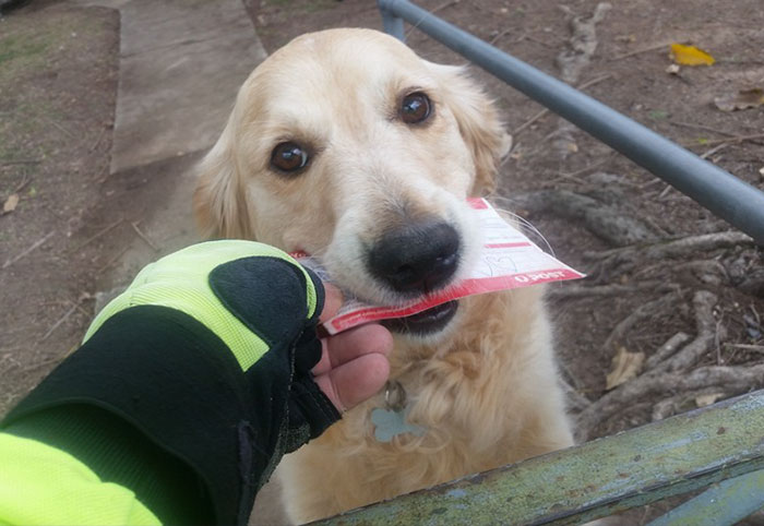 Dog Loves Getting Mail So Much That Postman Writes Her Letters Even When There's No Mail