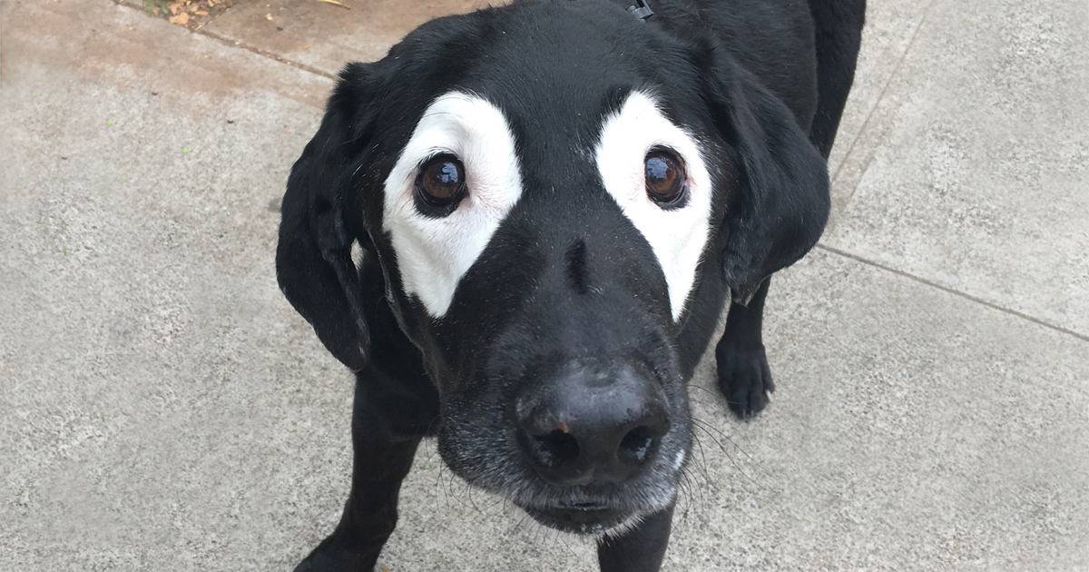 White Dog With Black Spot On Eye