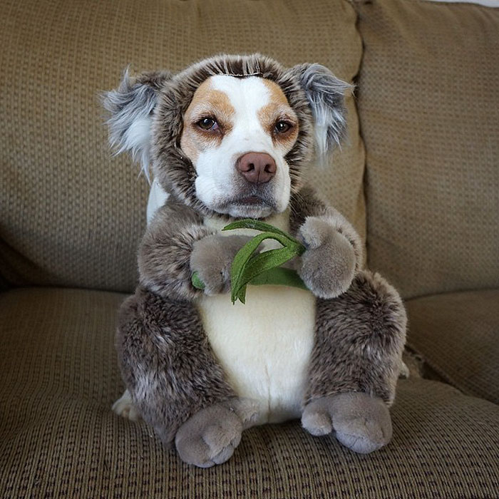 Dressed Up Dog