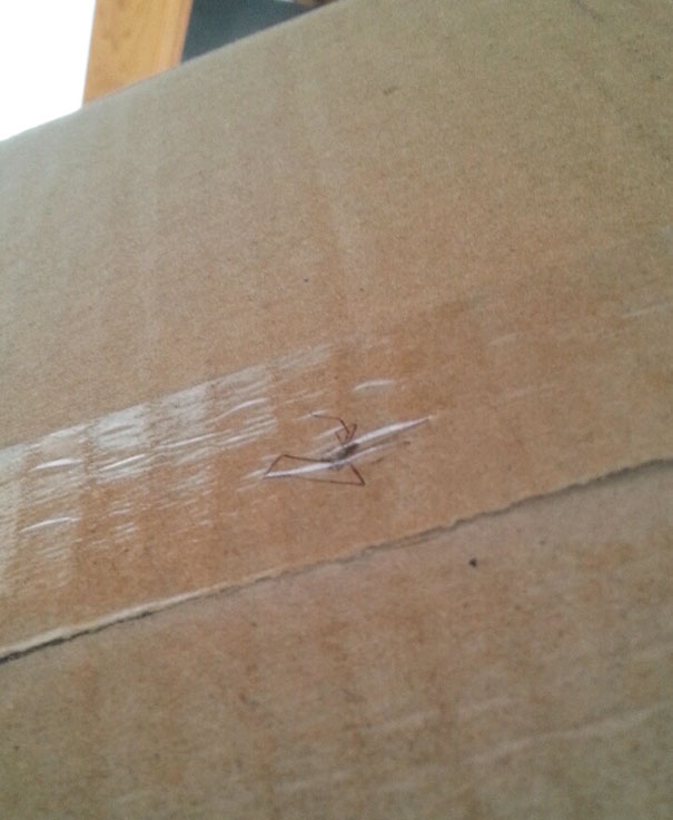 They Taped A Spider To My FedEx Package