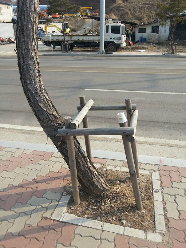 This Tree Gets It