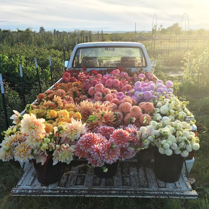 This Instagram Proves That A Florists' Job Is The Best Thing Ever