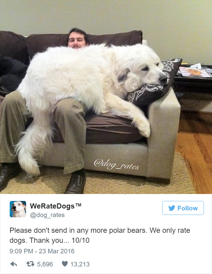 Please Stop Sending Polar Bears, We Only Rate Dogs. 10/10