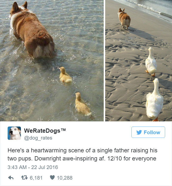 Single Father Raising His Two Pups. 12/10 For Everyone