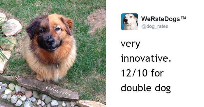 This Twitter Account Rates Dogs And It's Hilarious