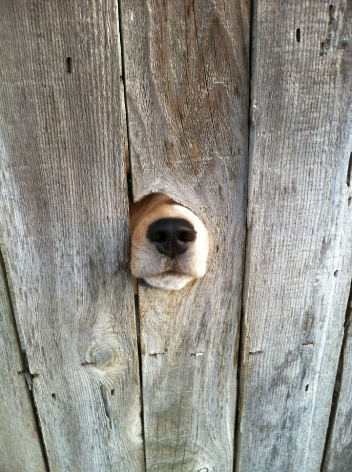 Dog's Nose Wants To Meet You