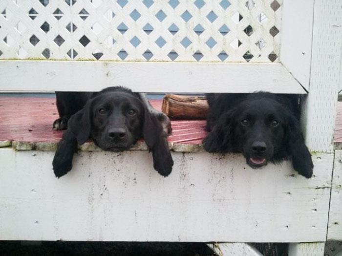 These Puppies Wanna Say Hi