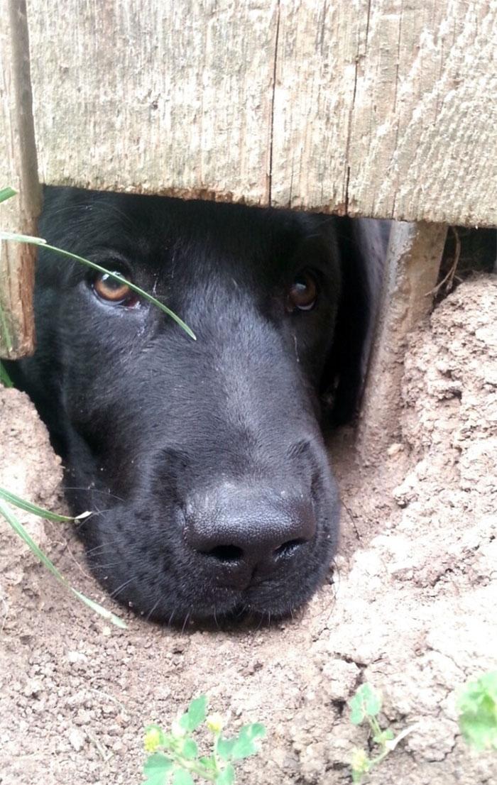 Neighbor's Dog Likes To Say Hi