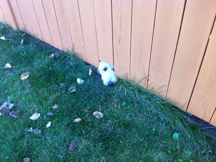 Found This Ball Of Fluff Under My Neighbour's Fence