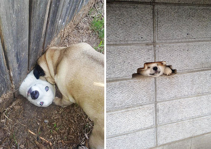 105 Desperate Dogs Who Just Want To Say Hi