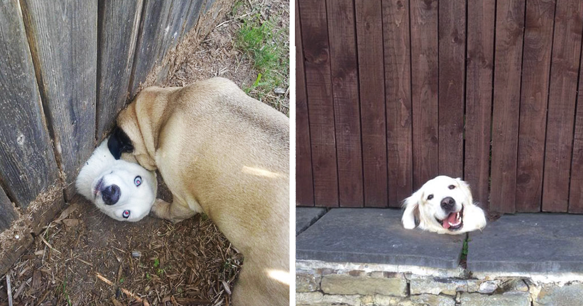 Funny Meme To Say Hello : 10 desperate dogs who just want to say hi bored panda