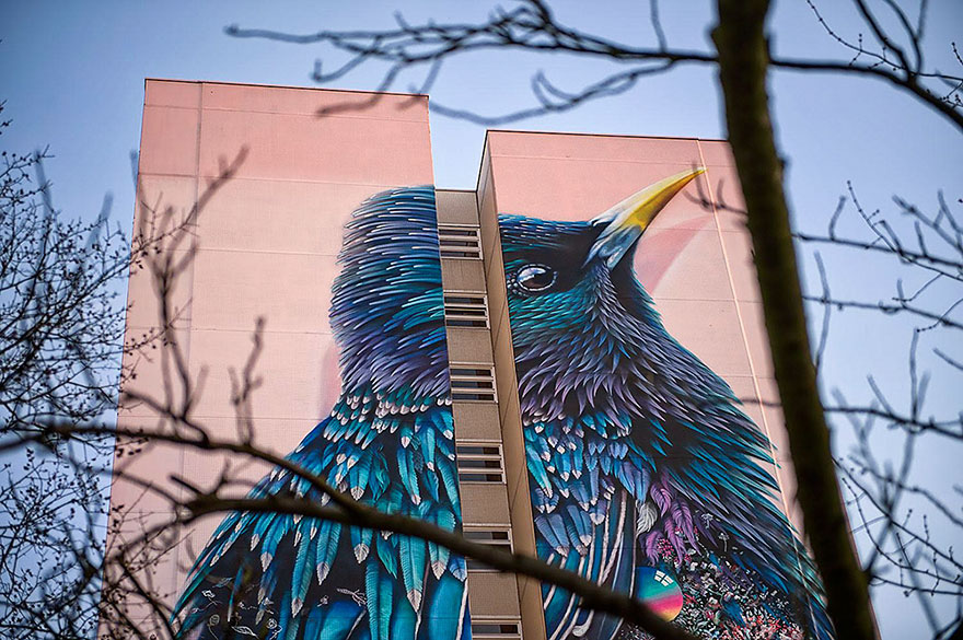 giant-starling-mural-street-art-collin-van-der-sluijs-super-a-berlin-4