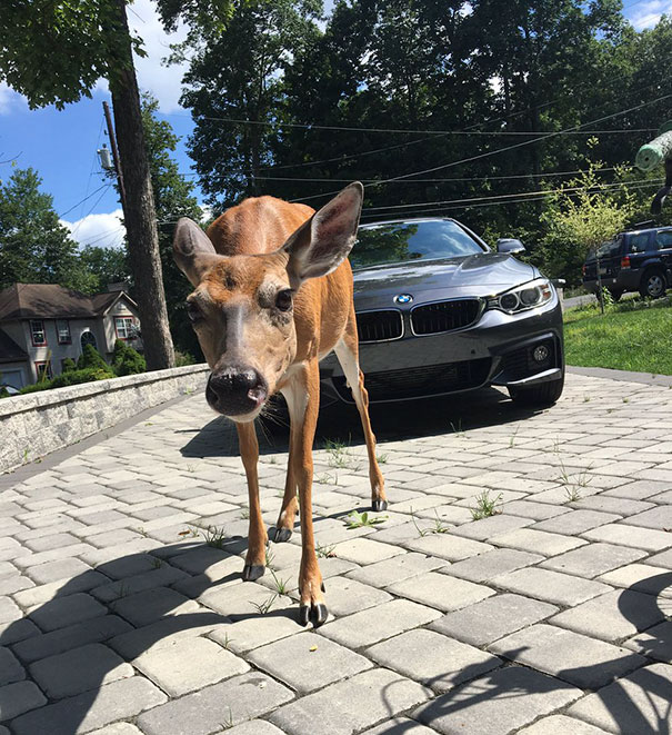 guy-deer-friend-kelvin-pena-coldgamekelv-8