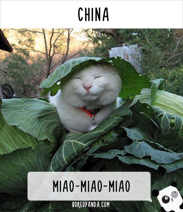 How People Call Cats In China