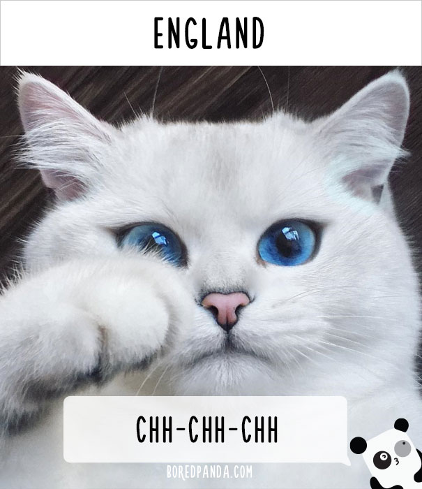 How People Call Cats In England