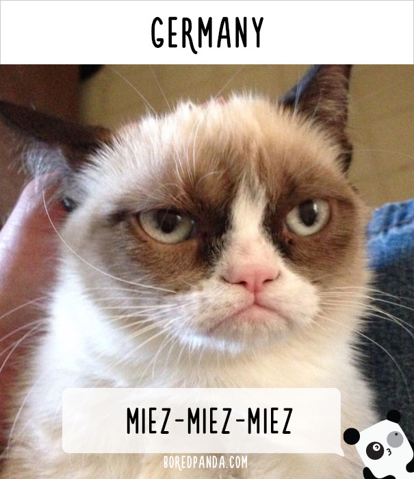 How People Call Cats In Germany