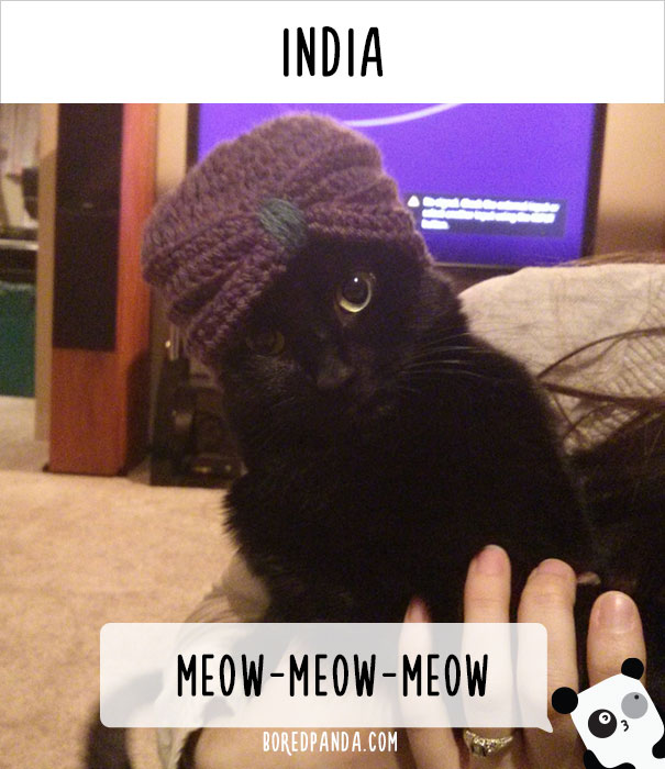 How People Call Cats In India