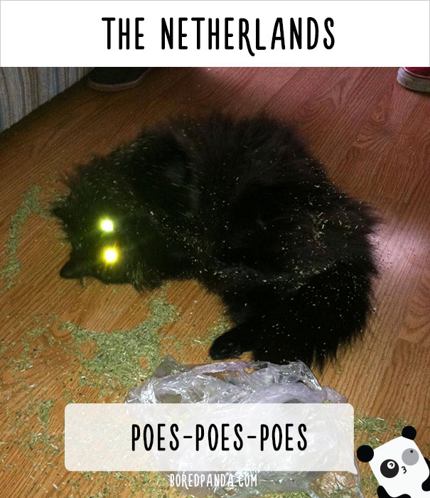 How People Call Cats In The Netherlands