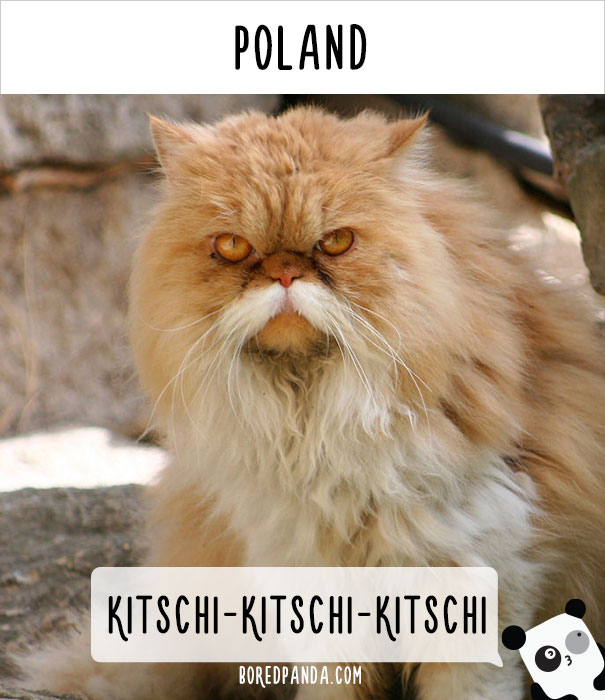 How People Call Cats In Poland