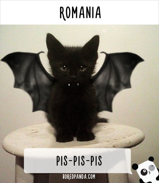 How People Call Cats In Romania
