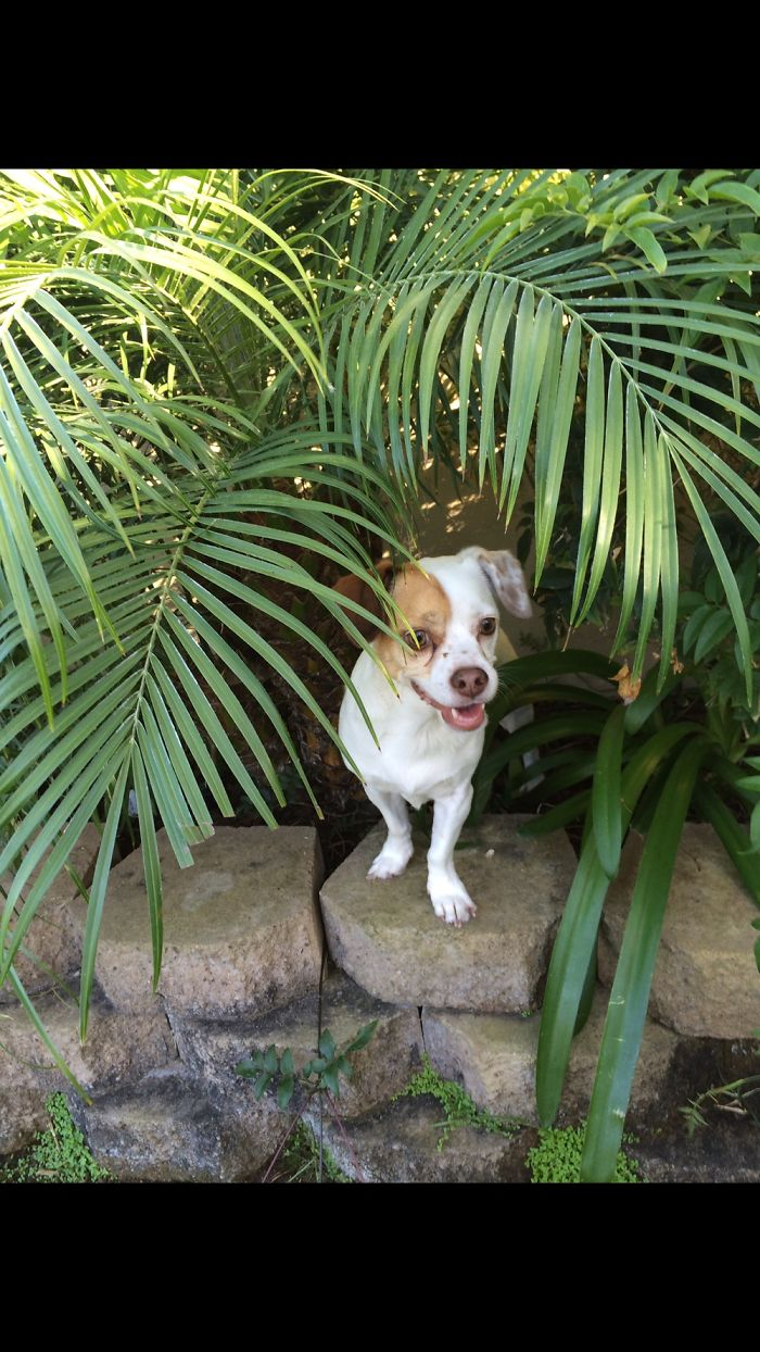 Jungle Pup Saying What's Up!