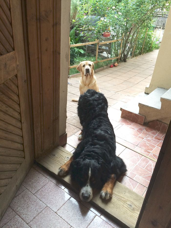 Hi! Can We Come In?