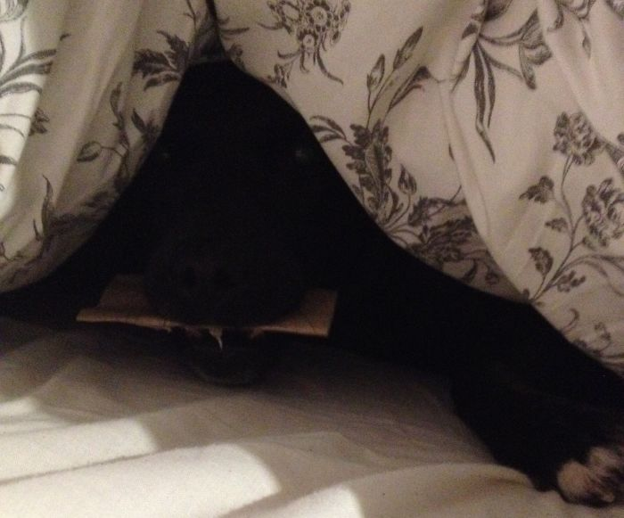 Hello From Under The Covers...