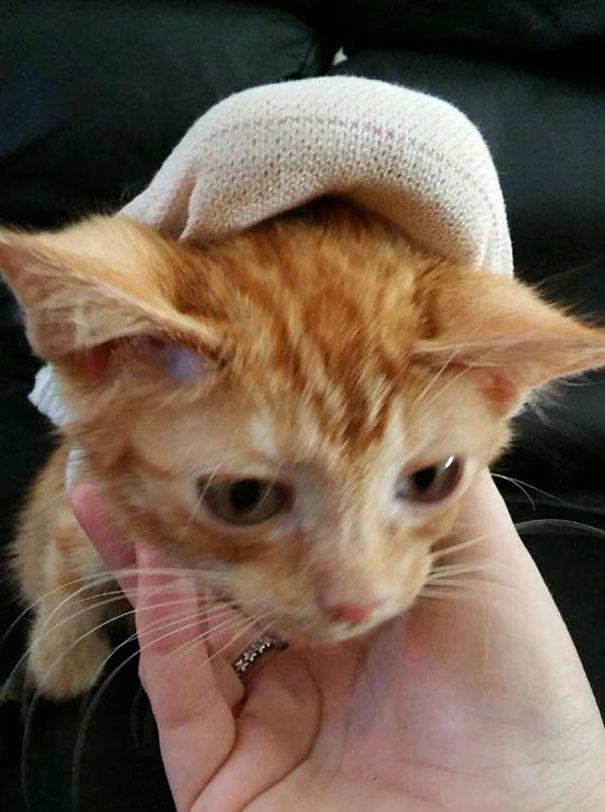 injured-kitten-hit-car-body-cast-purrito-davey-1